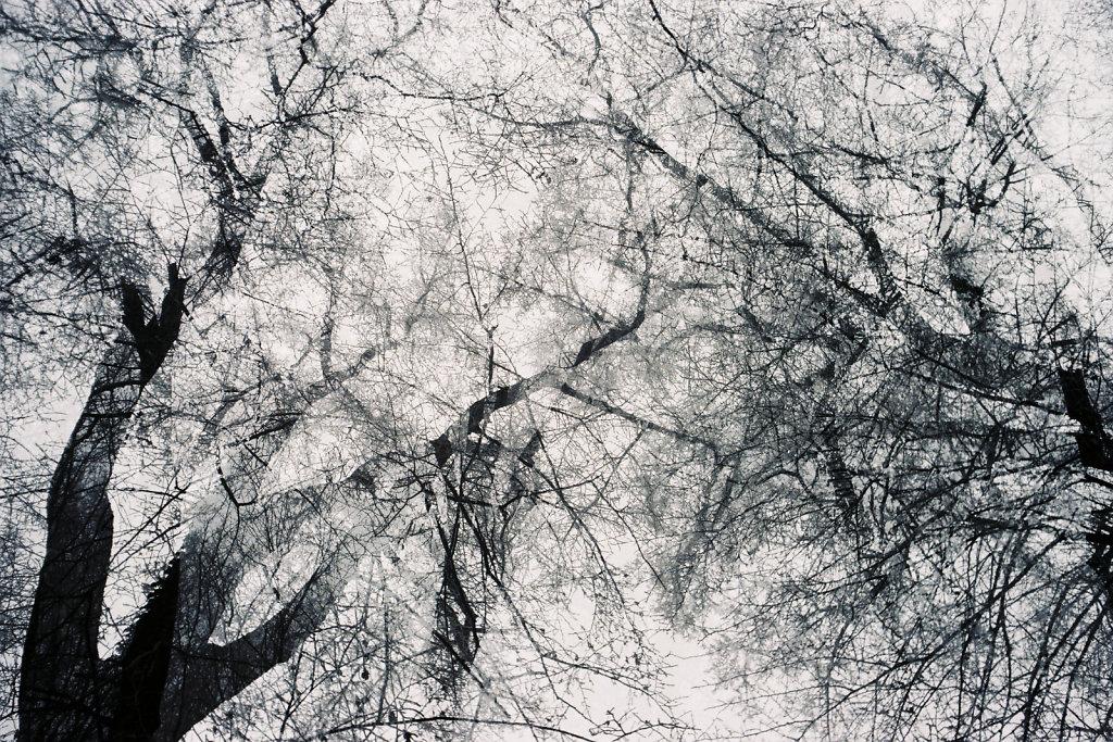 Branches entrelacées