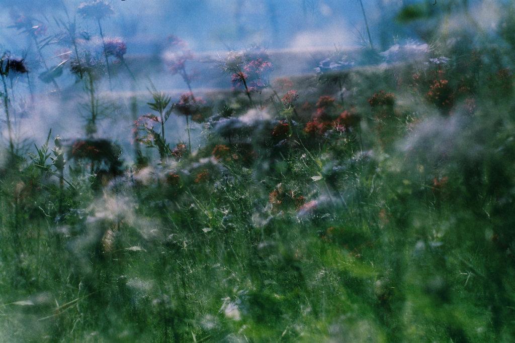 Composition florale I