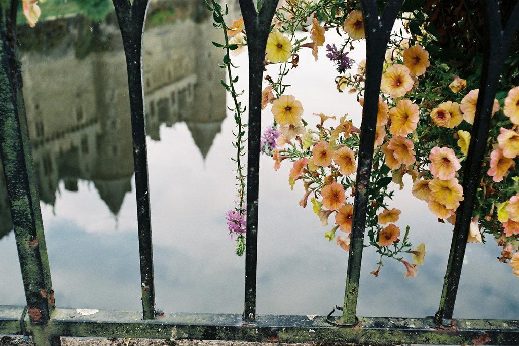 Reflet aux fleurs